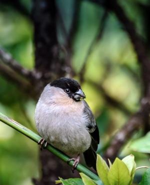 Azorean Biodiversity Portal