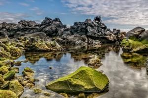 REDMIC -Marine Biodiversity Resources - Canary Islands
