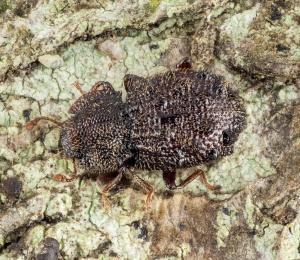 Azores ATLANTIS Biodiversity Database
