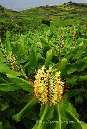 IUCN - Global Invasive Species Database