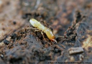 Invasive Alien Species Pathway Management Resource