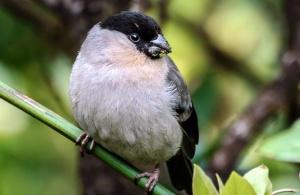 Azores Biodiversity Database